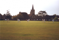 cricket_img