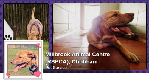 Millbrook RSPCA Gala Day